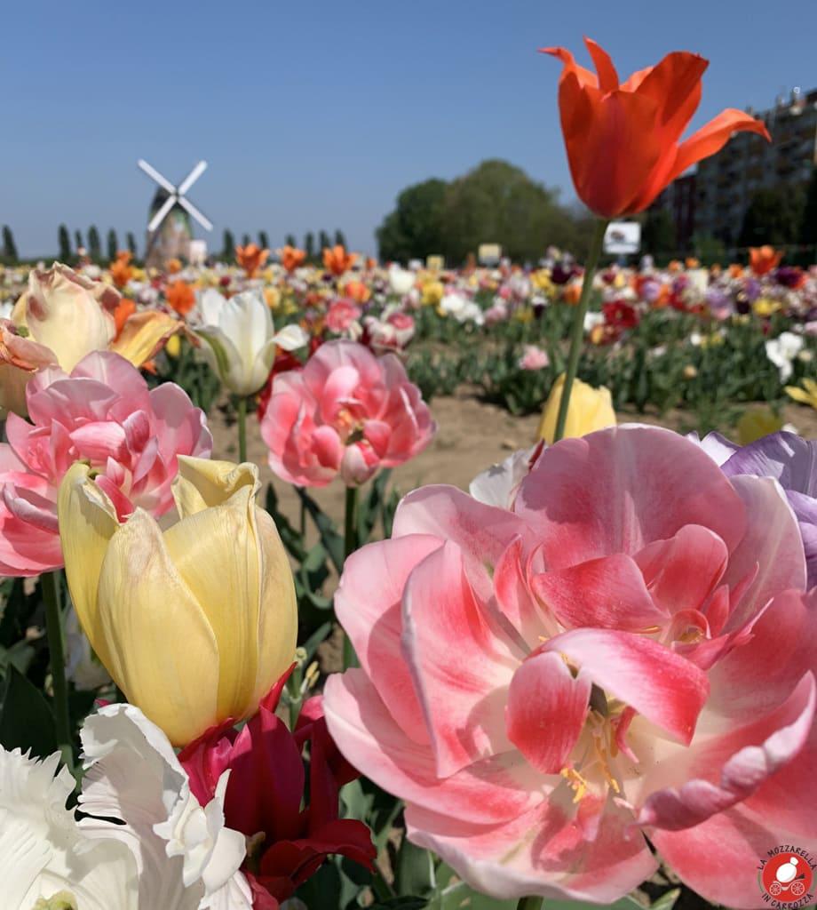 La Mozzarella In Carrozza - Fiore di maggio