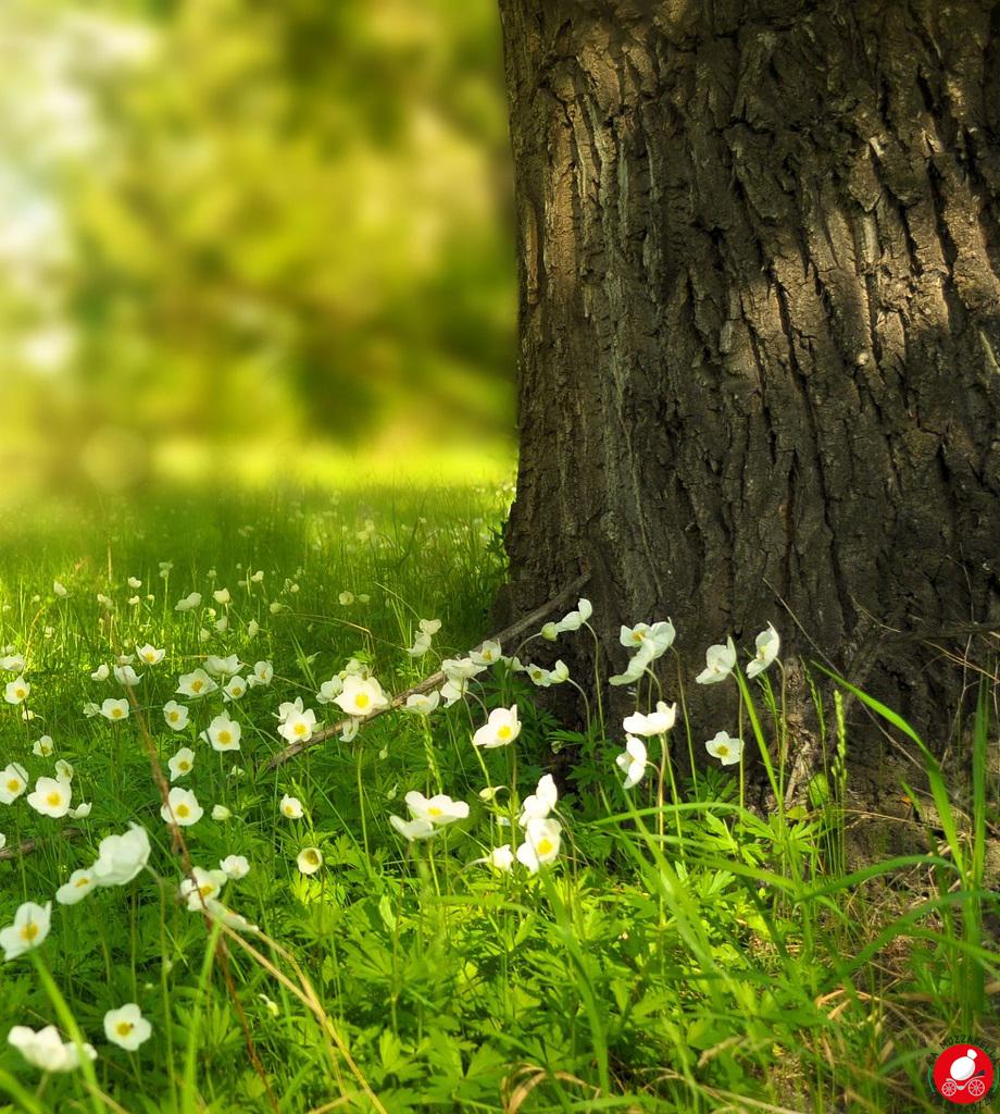 La Mozzarella in Carrozza - Woman, dad and spring